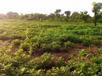 Beautifully Massive 6,000+ Acres Of Agriculture Land Property For Sale In Kintampo, Bono Region, Ghana