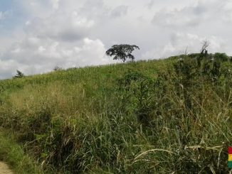 Agriculture Land For Lease In Asuogyaman, Eastern Region
